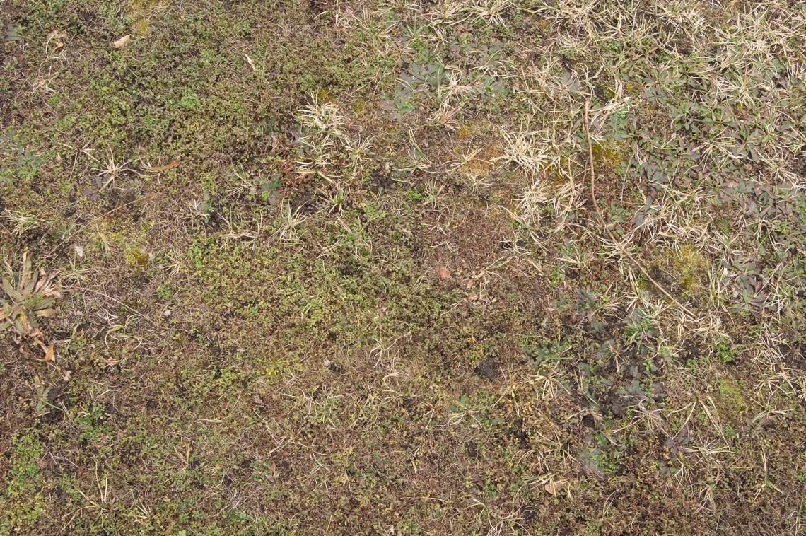 Moss 0029