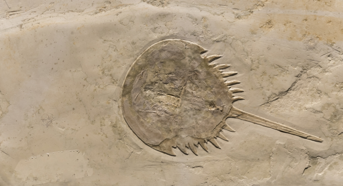 Fossils_Mixed_0016