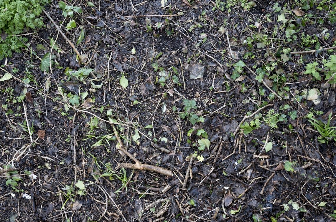 Ground Overgrown 0013