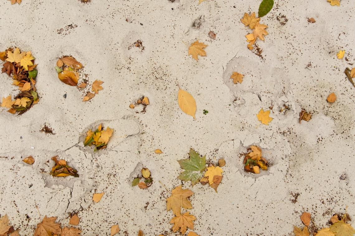 Ground Sandy