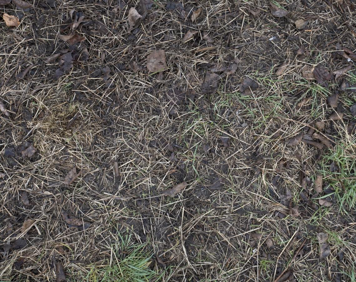 Ground Overgrown 0003
