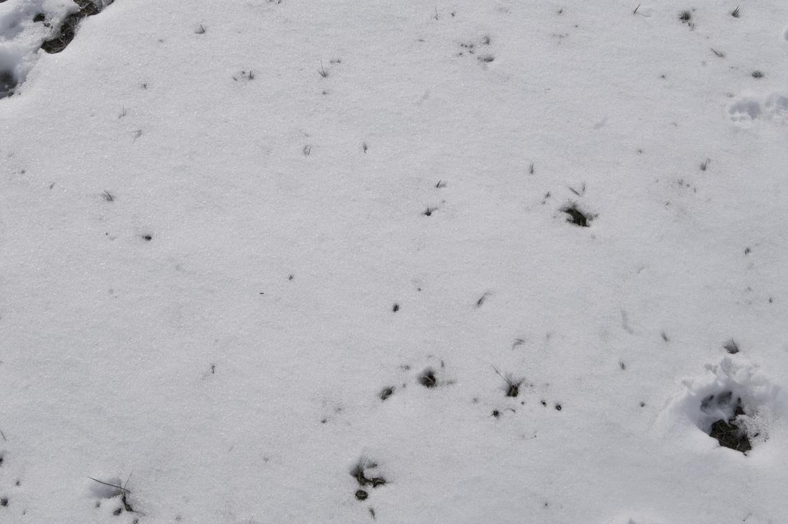 Snow Plain