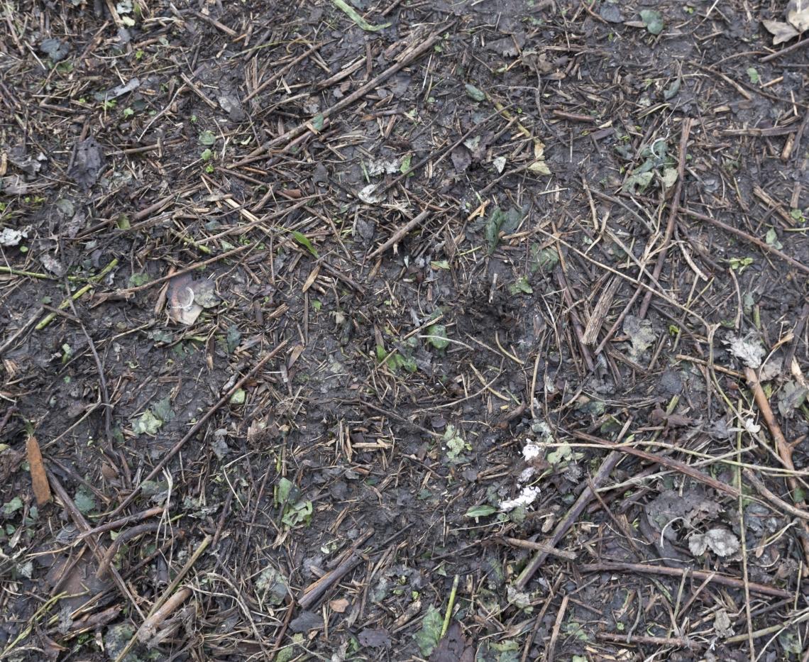 Ground Overgrown 0006