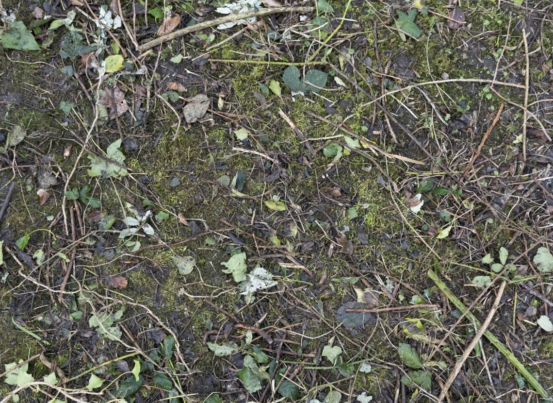 Ground Overgrown 0008