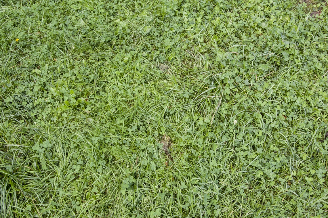 GrassGreen0201